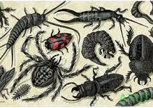 Etykieta robaki